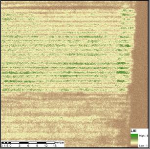 Карта индекса листовой поверхности LAI
