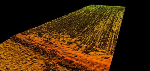 Цифровая модель местности с заливкой по высоте. Посевы озимой пшеницы