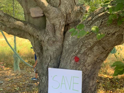 50 trees slated for removal along Richmond's South Dyke Trail