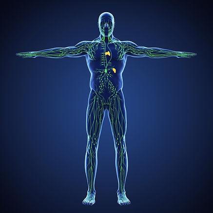 Lymphatic System.jpeg