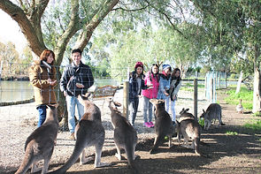 Melbourne Local tour, Melbourne Chinese Tour, Melbourne Chinese Day Tour, Melbourne Cantonese Day Tour, Melbourne Local Tour, Melbourne day tour, Melbourne day tours, Puffing Billy, 墨爾本旅遊團,