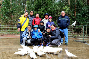 Melbourne Local tours, Melbourne Chinese Tour, Melbourne Chinese Day Tour, Melbourne Cantonese Day Tour, Melbourne Chinese Tour, Melbourne Chinese Day Tour, Melbourne day tour, Melbourne day tours, Puffing Billy, 墨爾本旅遊團,