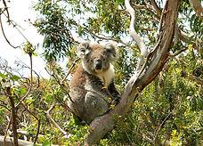 长青热门国际游, 澳大利亚长青旅游, extra green, 墨爾本旅遊玩家,  your Melbourne tour, 痞客邦, PIXNET, Melbourne waterfalls, 墨爾本自助旅行, 墨爾本旅遊, Rex Melbourne Tour, 雷克斯, 凱蒂的墨爾本旅遊, Candy Melbourne Day Tours, 阳光墨尔本, 宏城旅游, 澳洲真正最大华人旅行社,