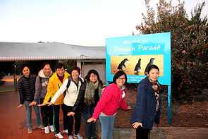 KK Melbourne tours, Melbourne Chinese Tour, Melbourne Chinese Day Tour, Melbourne Cantonese Day Tour, Philip Island, Melbourne day tour, Melbourne day tours, Puffing Billy, Melbourne Chinese Tour, Melbourne Chinese Day Tour,