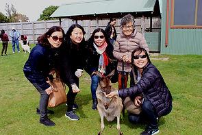 看看墨爾本廣東話旅遊團, Melbourne Chinese Tour, Melbourne Chinese Day Tour, Melbourne Cantonese Day Tour, Melbourne day tour, Melbourne day tours, Melbourne Cantonese Tour, 墨爾本 local tour, Melbourne day tour, Melbourne day tours, 墨爾本旅遊團,