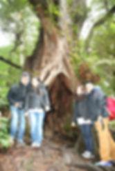 KK Melbourne tours, Melbourne Chinese Tour, Melbourne Chinese Day Tour, Melbourne Cantonese Day Tour, Melbourne Chinese Tour, Melbourne Chinese Day Tour, Melbourne day tour, Melbourne day tours, Puffing Billy, KK墨爾本旅遊團,