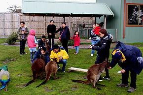 墨爾本中文小團一日游 Phillip Island Day Tour, 墨爾本粉紅湖, Melbourne Pink Lake,