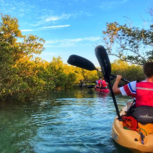 Séance de Kayak dans les Mangroves  de Abu Dhabi