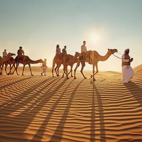 Safari au coucher du soleil à Dubai +transport,Visite ferme,surf, quad possible