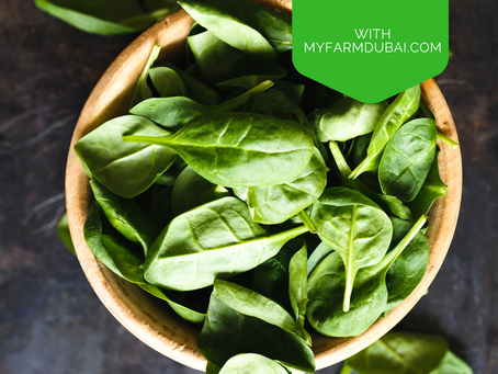 The health benefits of basil
