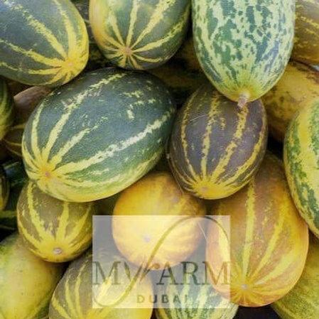 Organic Mangalore Indian Cucumber Seeds