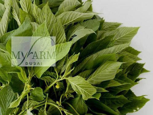 Organic Molokhia Seeds