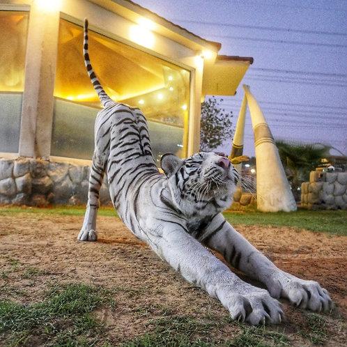 Visite d'un Zoo privatif à Dubai ( avec guide Français, Anglais et Russe)