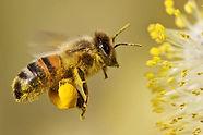 pollen3.jpg