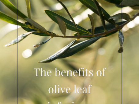 Discover the benefits of olive leaves in infusion :