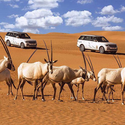 Safari de luxe avec Transport et Diner haut de gamme