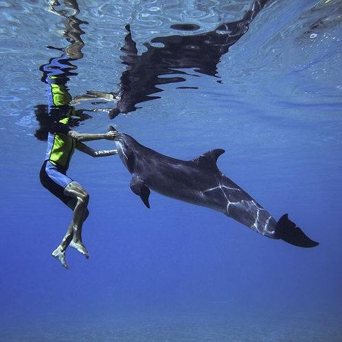 Nage avec les dauphins en eaux profondes à Dubai
