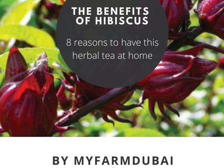Hibiscus infusion, properties: 8 reasons to have this herbal tea at home