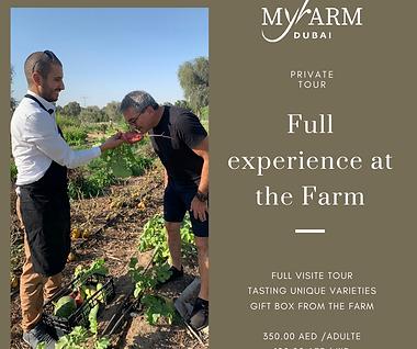 Full experience at the farm