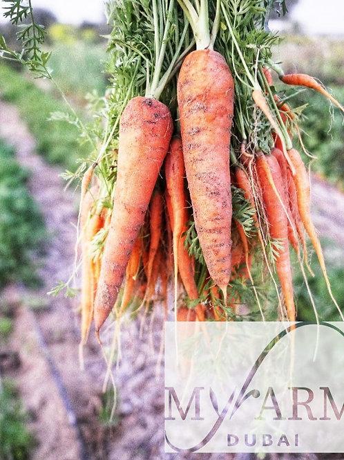 Organic Carott Seeds  بذور الجزر