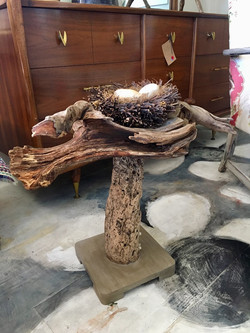 Driftwood Table with Bird's Nest