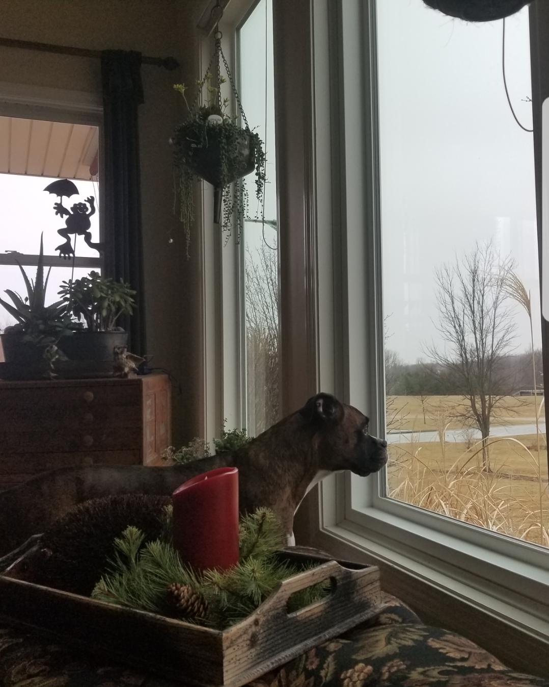Layla Bird Watching