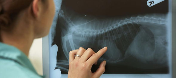 4-рентген.jpg