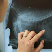 4-рентген-мал.JPG