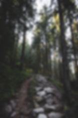 Wandern Pfade im Wald