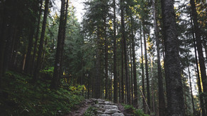 5 Ways Hiking Combined with Chiropractic Care Can Improve Your Health - 5/25/2021
