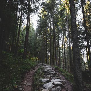 Zofnass Family Preserve / Westchester Wilderness Walk
