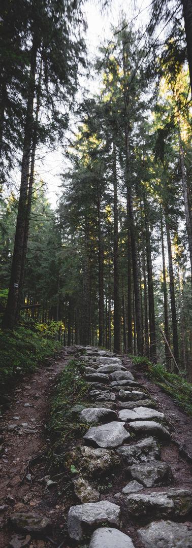 Chemin de randonnée dans la forêt
