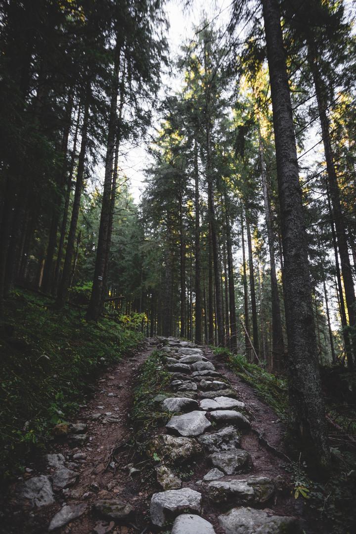 Weg van de wandeling in Forest