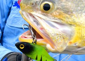 GOOD GEAR - FISH SNAKZ VIBES – CONTINUE TO IMPRESS