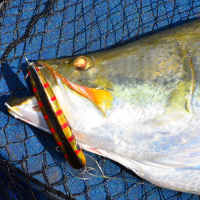 PA: Favourite Barra Lures – 6 Anglers Reveal