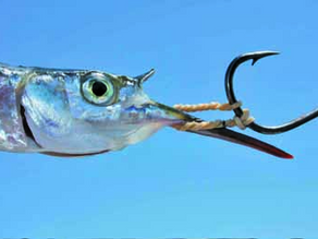 ONE MAN™S HOOKS - Big reds on Big Reds & hoodlums on Hoodlums