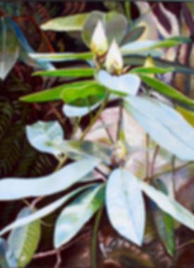 Plumwood Waratah 3.jpg