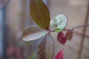 Bee_Garden2 2.jpg