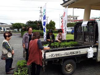 野菜苗の即売会を実施しました。