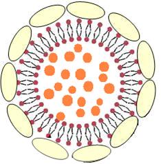 Actosome Whitenol