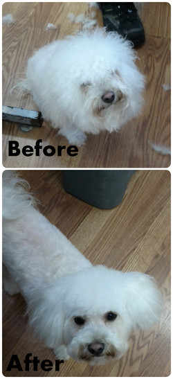 Before after1.jpg