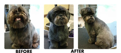 Before after7.jpg