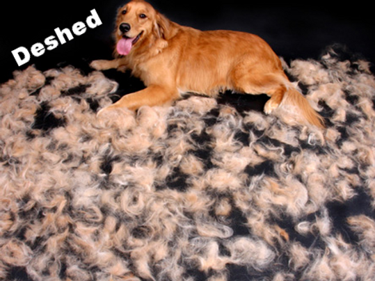Mobile dog grooming Franklin TN, Mobile dog grooming Spring Hill TN, Mobile dog grooming Franklin TN