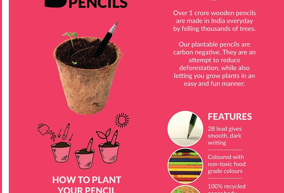Premium Plantable seed pencil box (5pc)