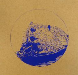 beaver b