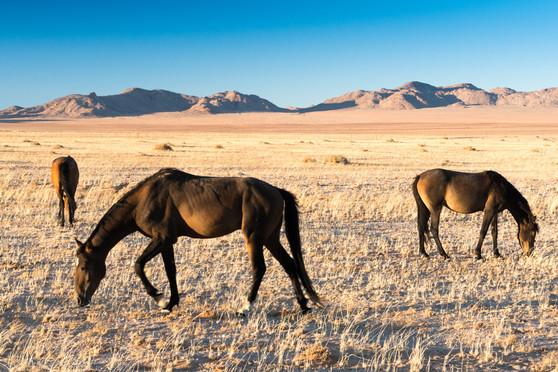 Namibia-7113.JPG