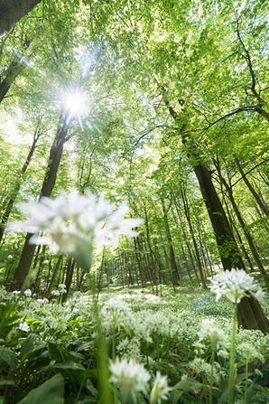 Thüringen Natur