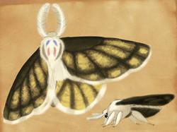 Downy-faced Moth
