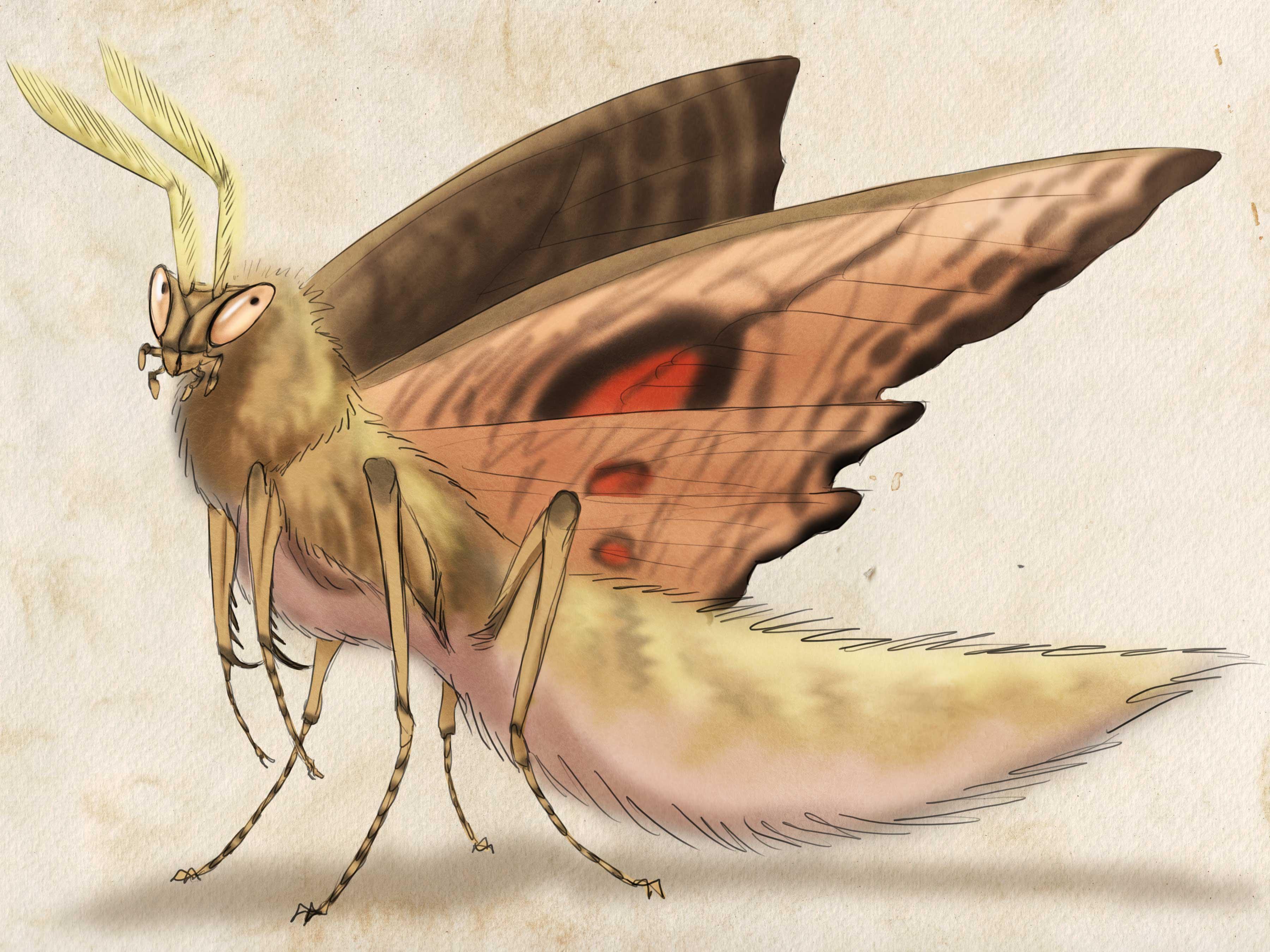 Wooly mantis