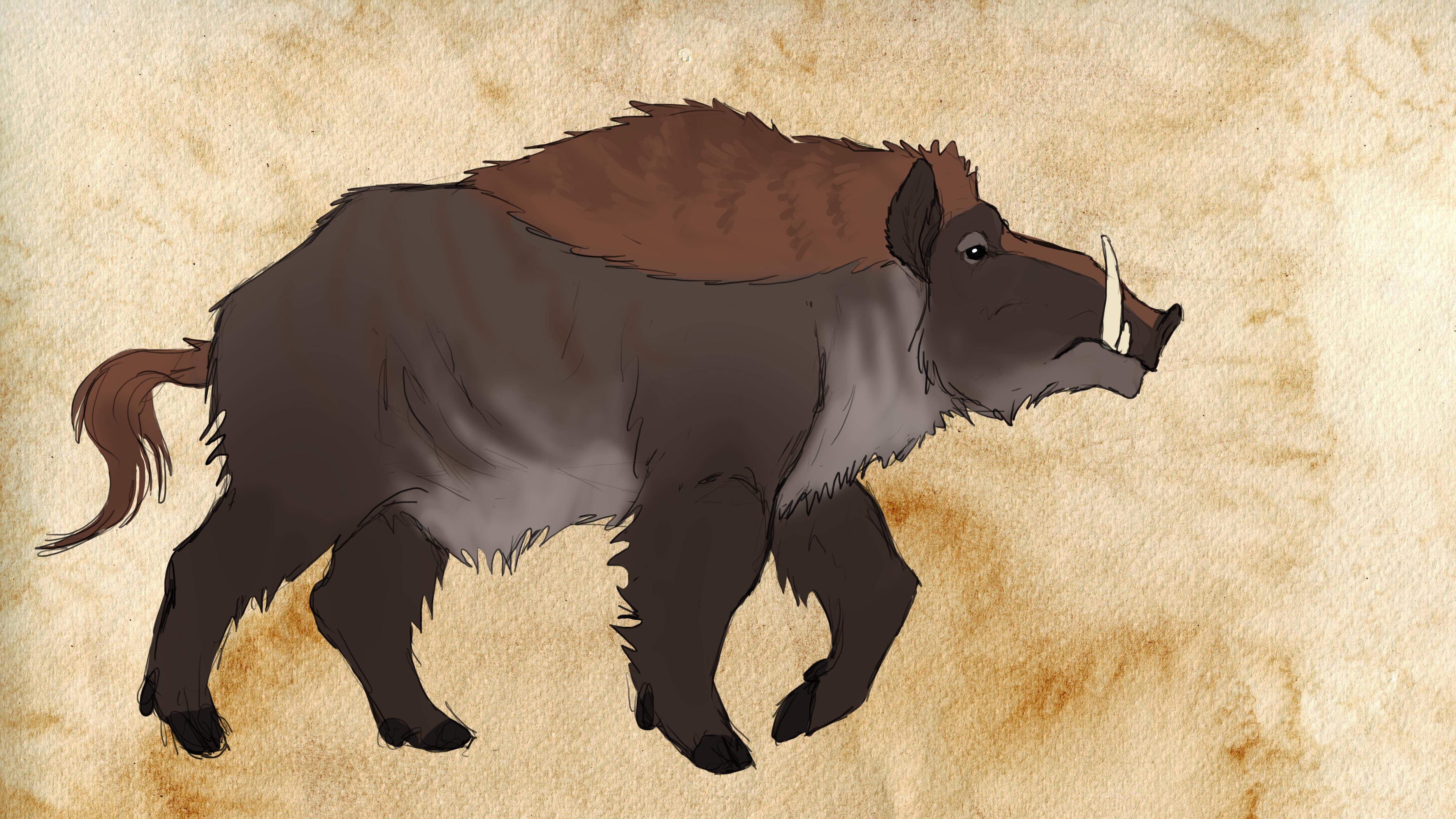 Kellaborn wild boar
